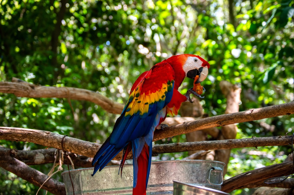 red yellow and blue macaw