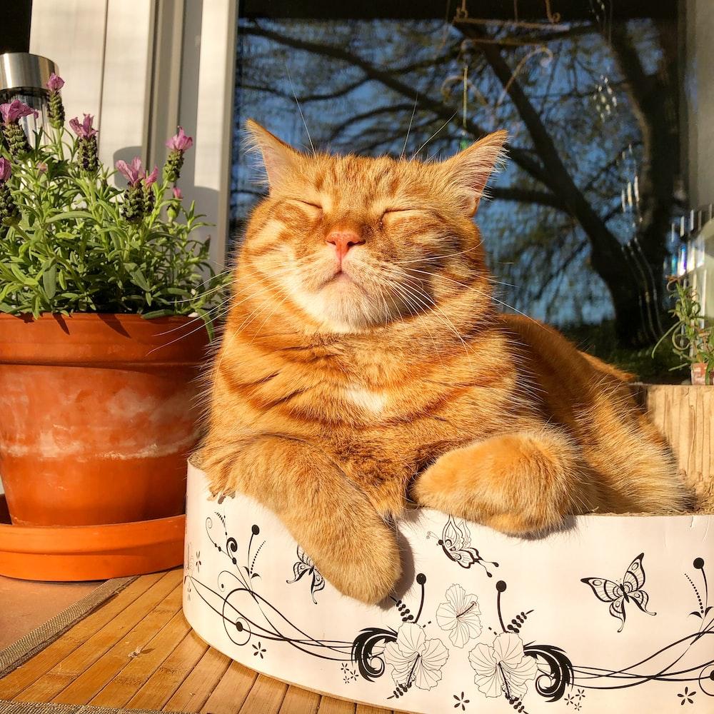 orange tabby cat on white and black cat print ceramic mug