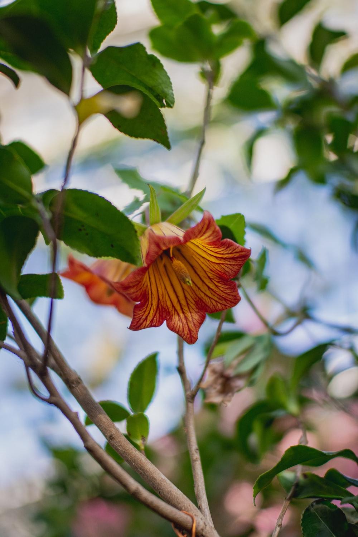 red and yellow flower in tilt shift lens