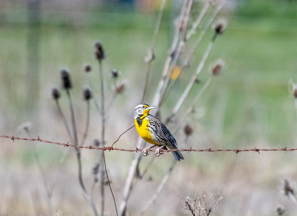yellow and black bird on brown tree branch during daytime