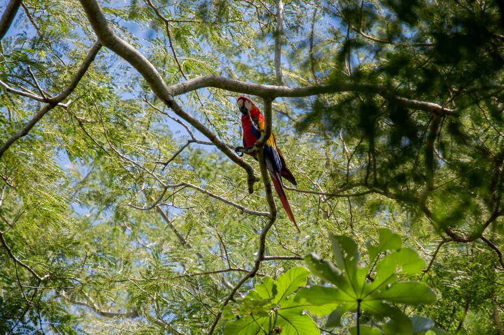 red and yellow macaw on green tree during daytime