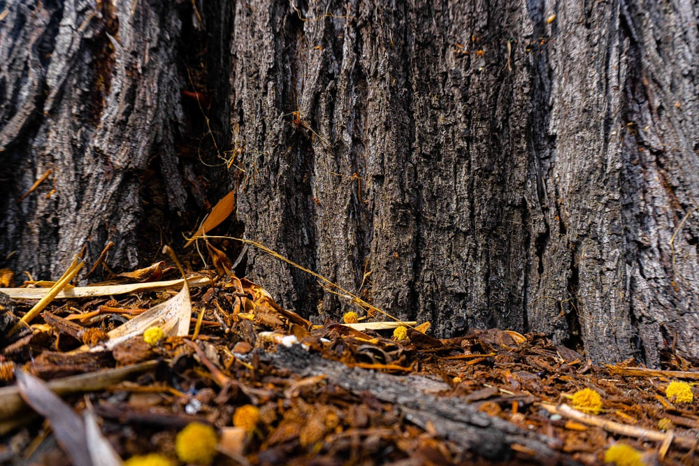 brown tree trunk with dried leaves