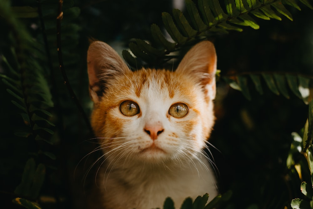 orange and white cat in green leaves