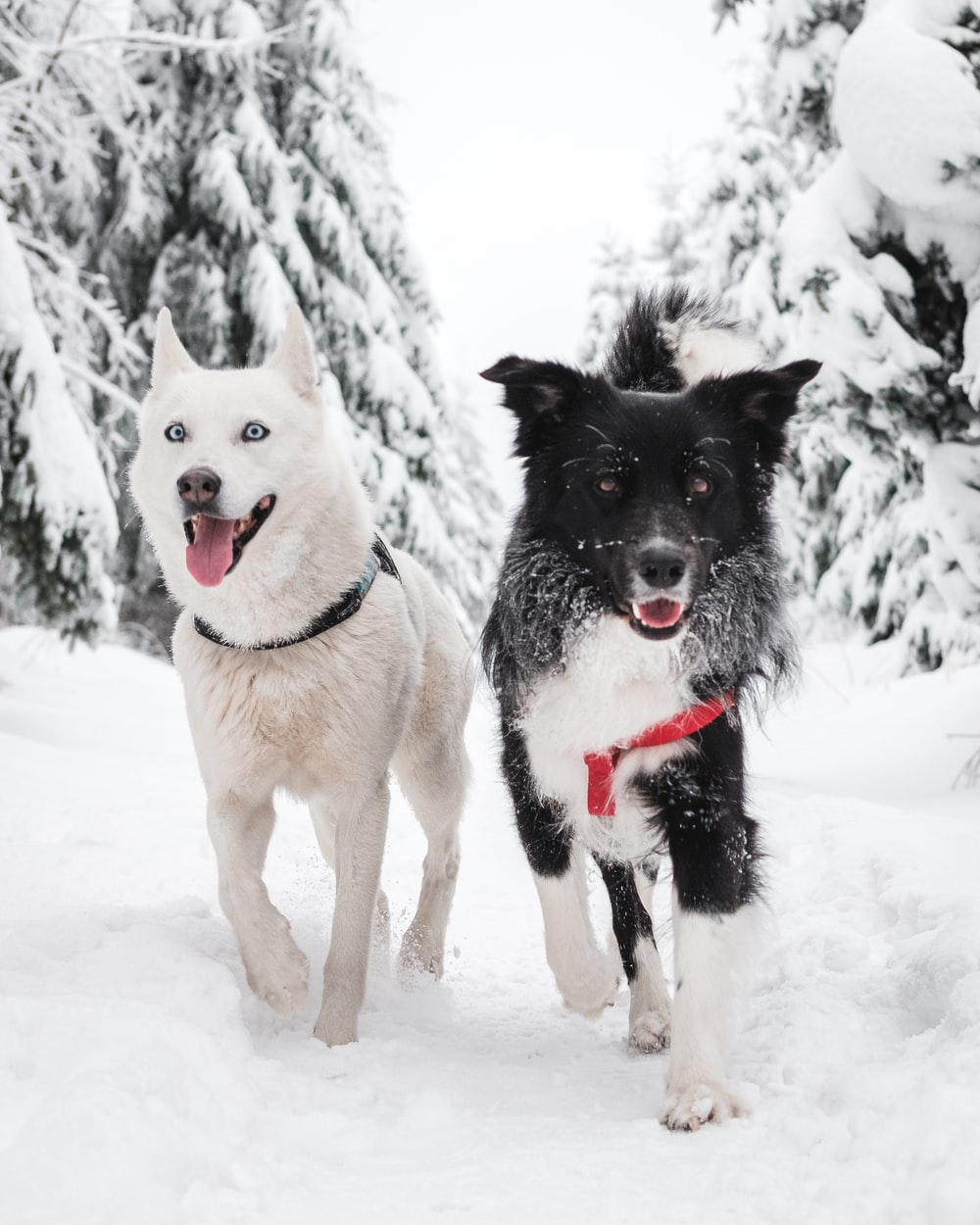 white and black dogs on snow covered ground during daytime