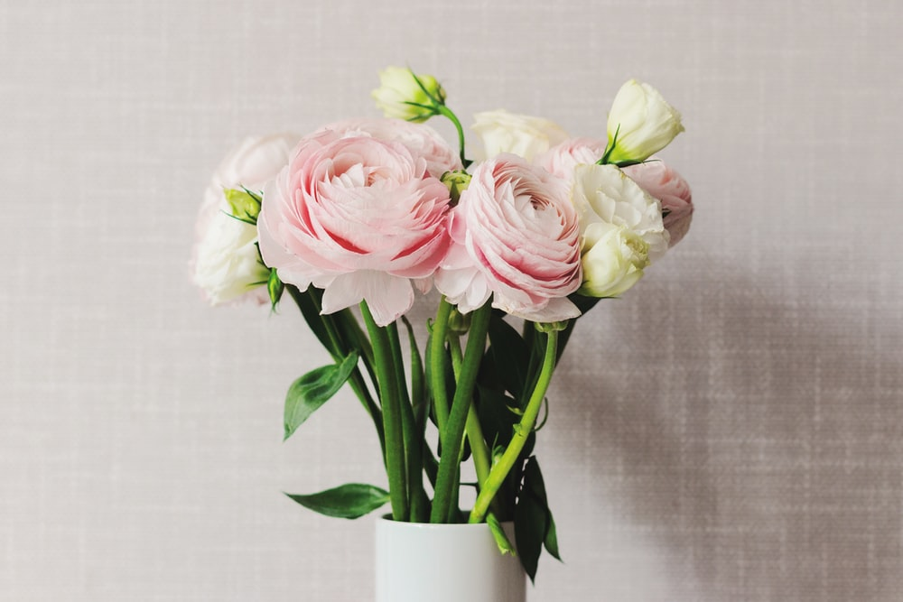 pink and white roses in white ceramic vase