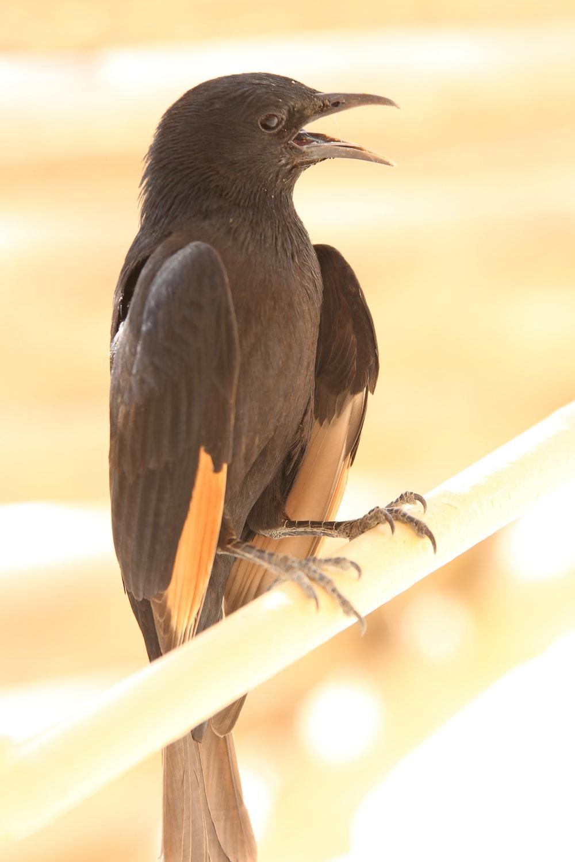 black bird on brown wooden stick