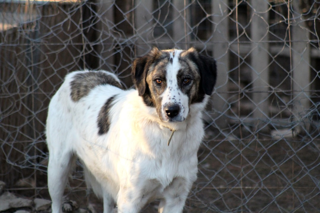 Afroditi from Stray Planet, Thessaloniki, Greece Looking for a permanent home