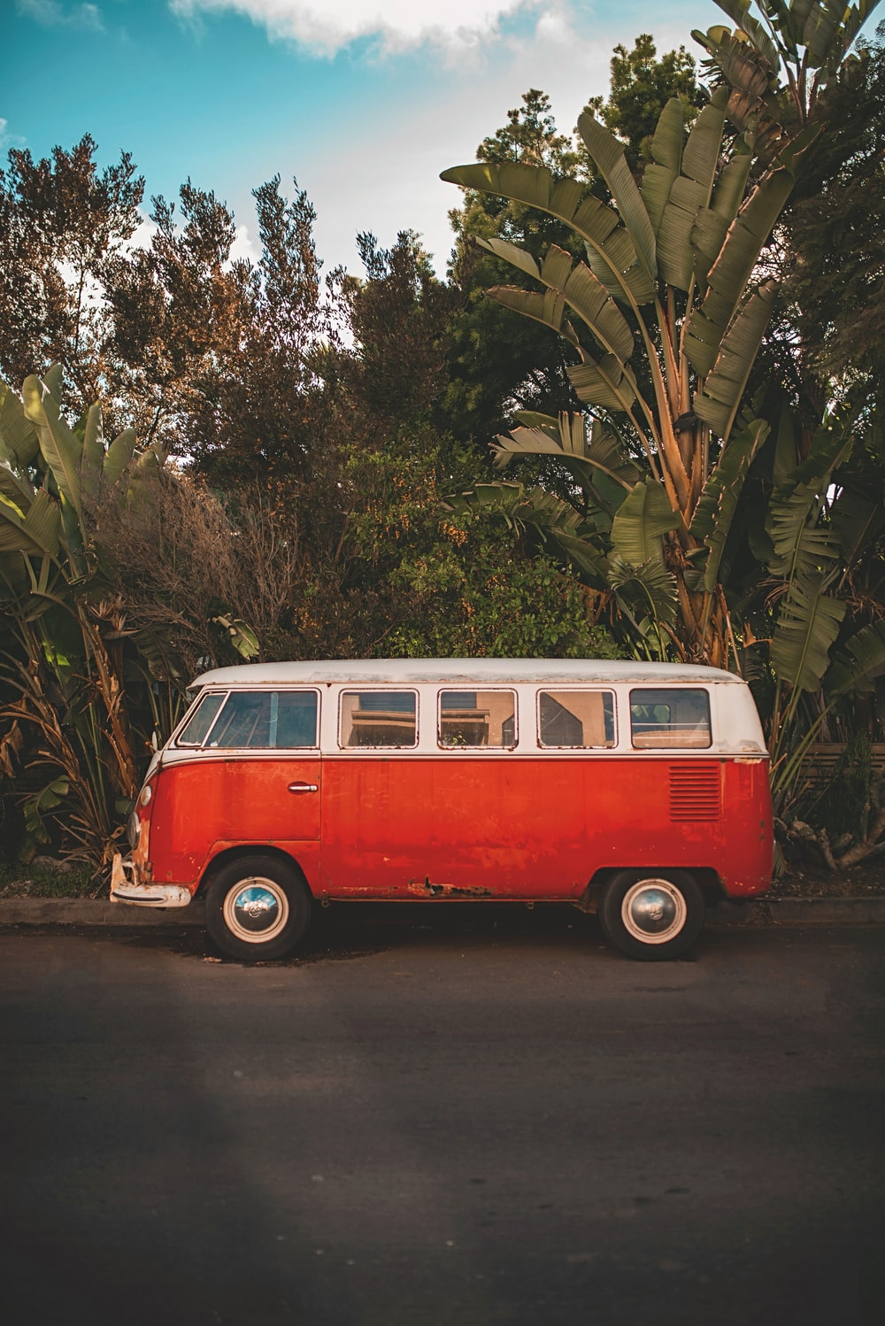red and white volkswagen t-2 van parked beside green palm tree during daytime