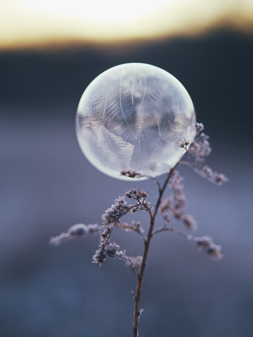clear glass ball on brown plant