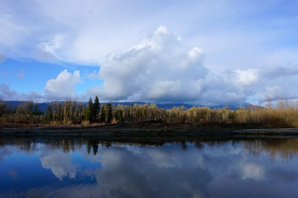 green trees beside lake under white clouds and blue sky during daytime