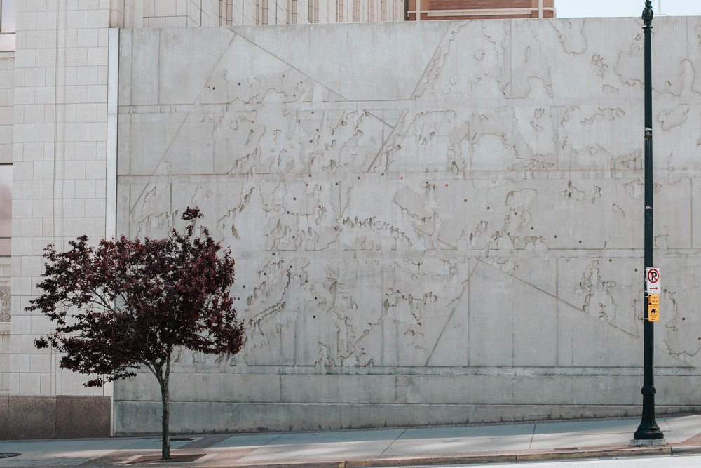 green tree beside white concrete wall