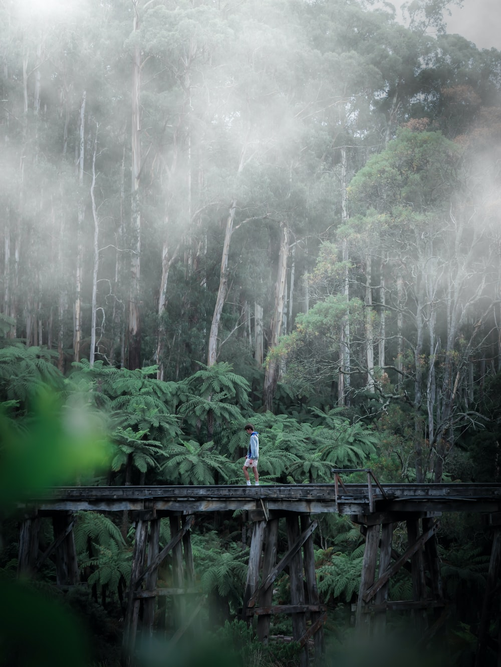 people walking on wooden bridge over green trees during daytime