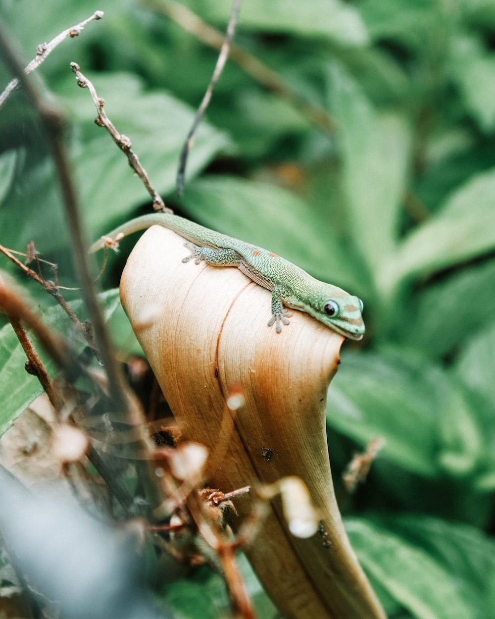 green lizard on brown wooden tree branch