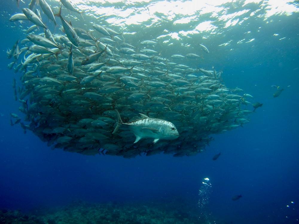 white and gray fish under water
