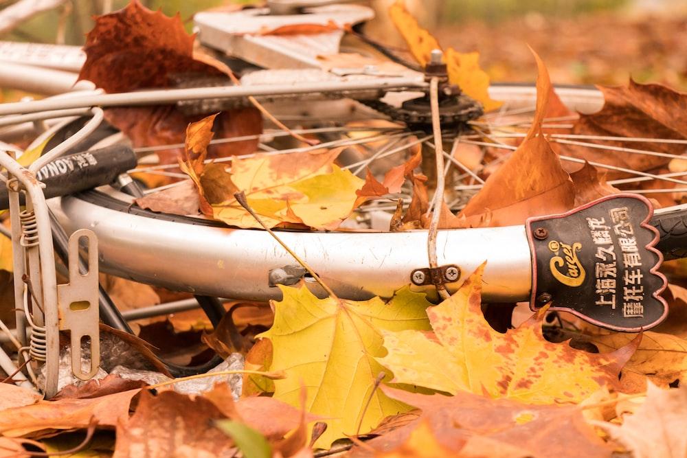 brown dried leaves on gray metal pipe