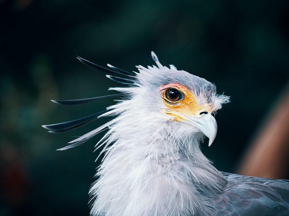 white and black eagle in close up photography