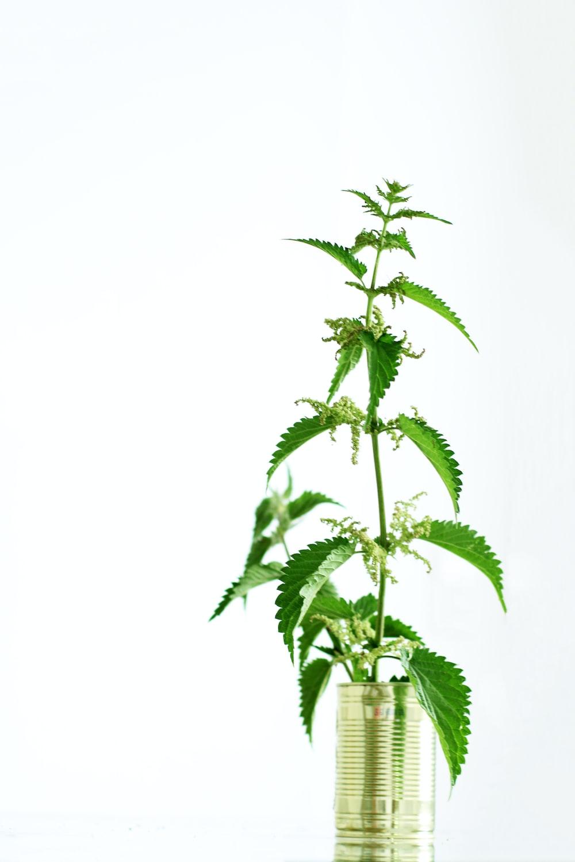 green plant in glass jar