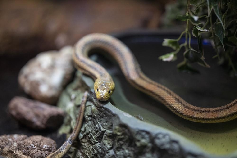 brown snake on gray rock