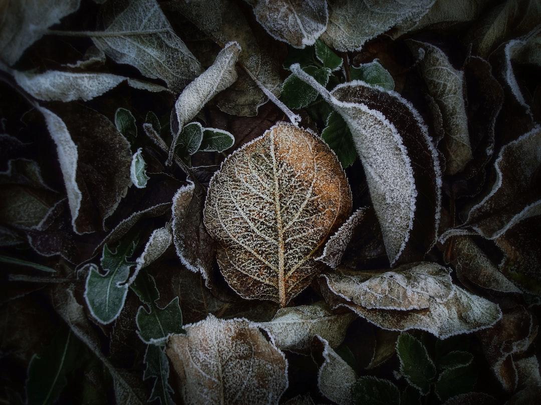 .. in frosty fetters🍂❄...