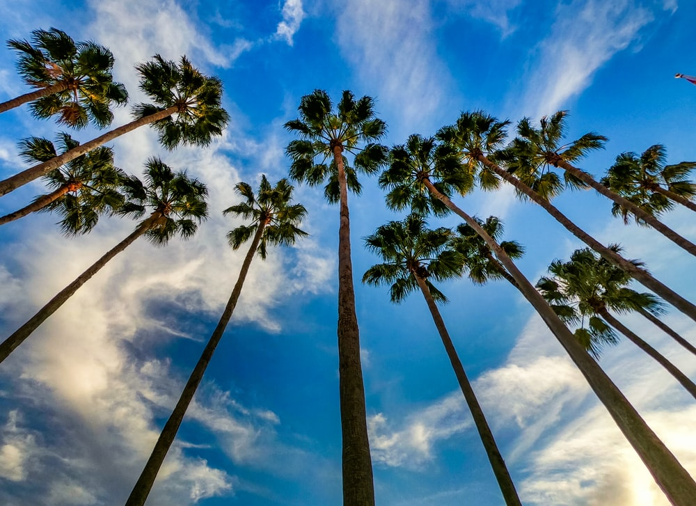 green palm trees under blue sky and white clouds during daytime
