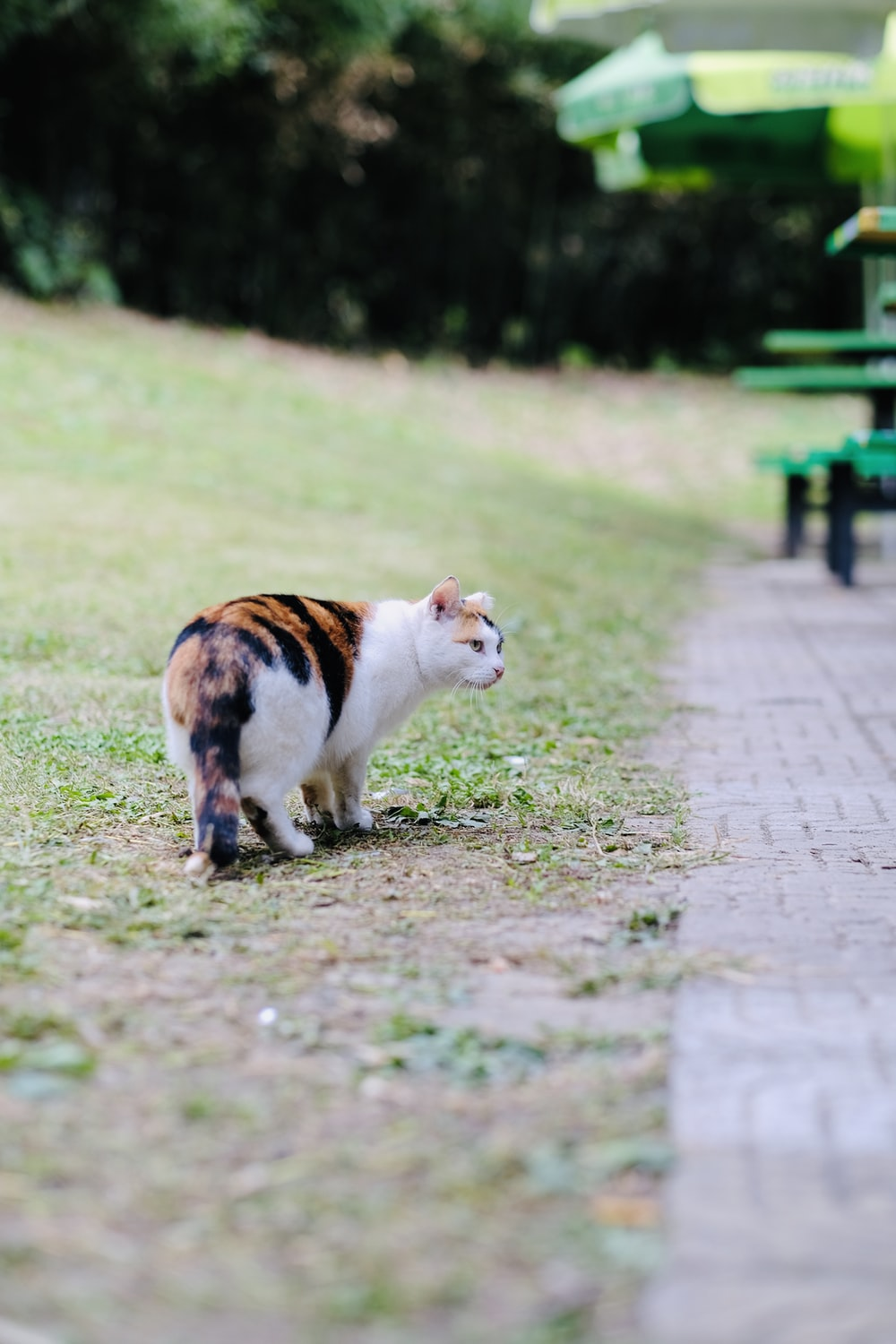 orange and white cat on brown dirt road during daytime