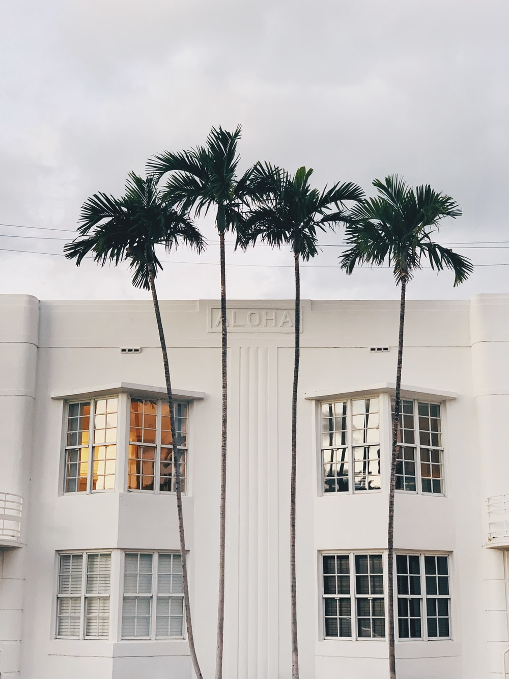 white concrete building with palm tree in front