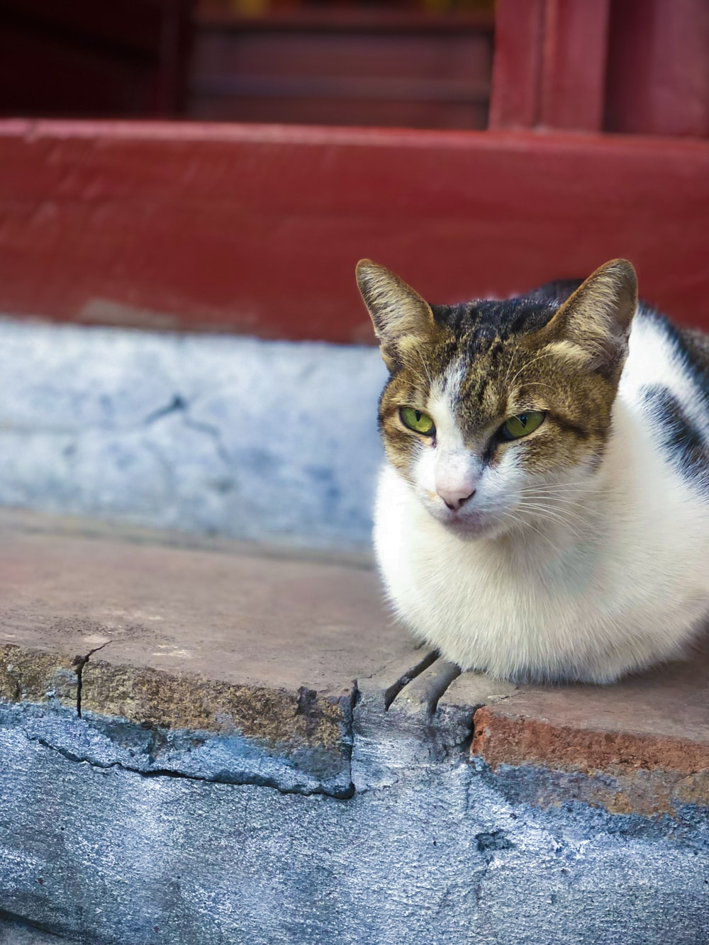 white and brown cat on brown concrete surface