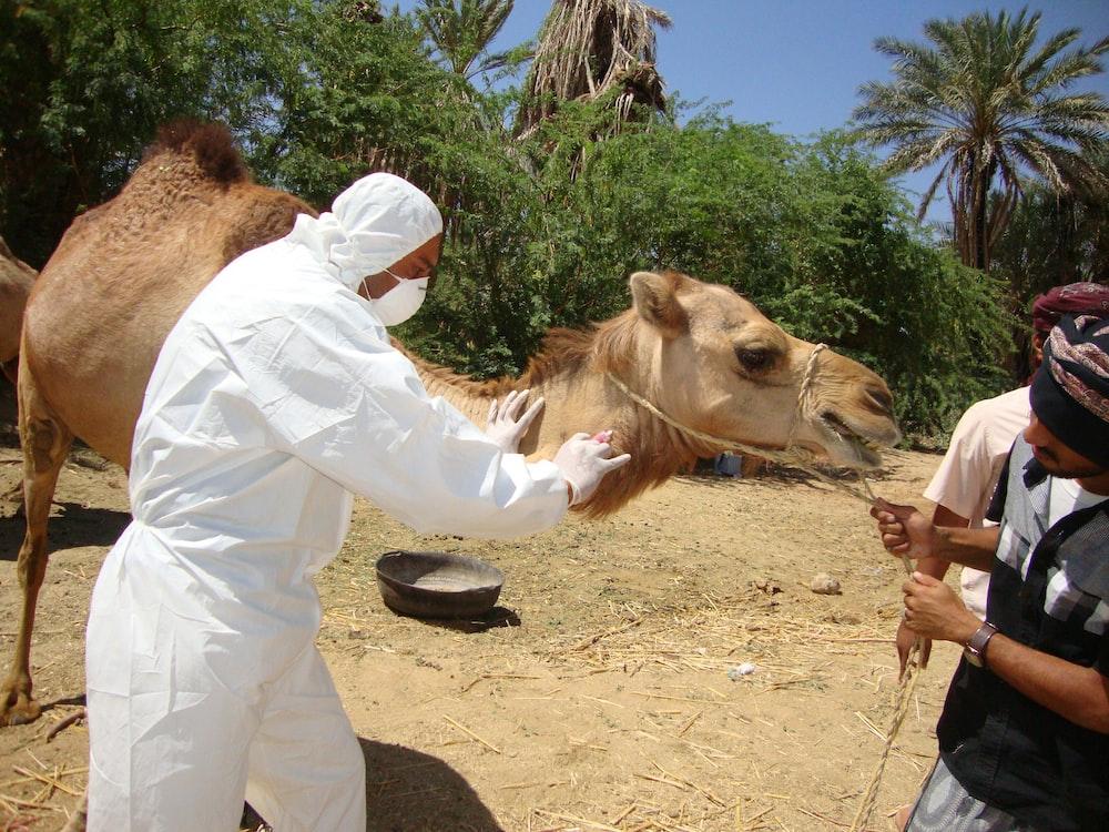 man in white long sleeve shirt riding brown camel during daytime