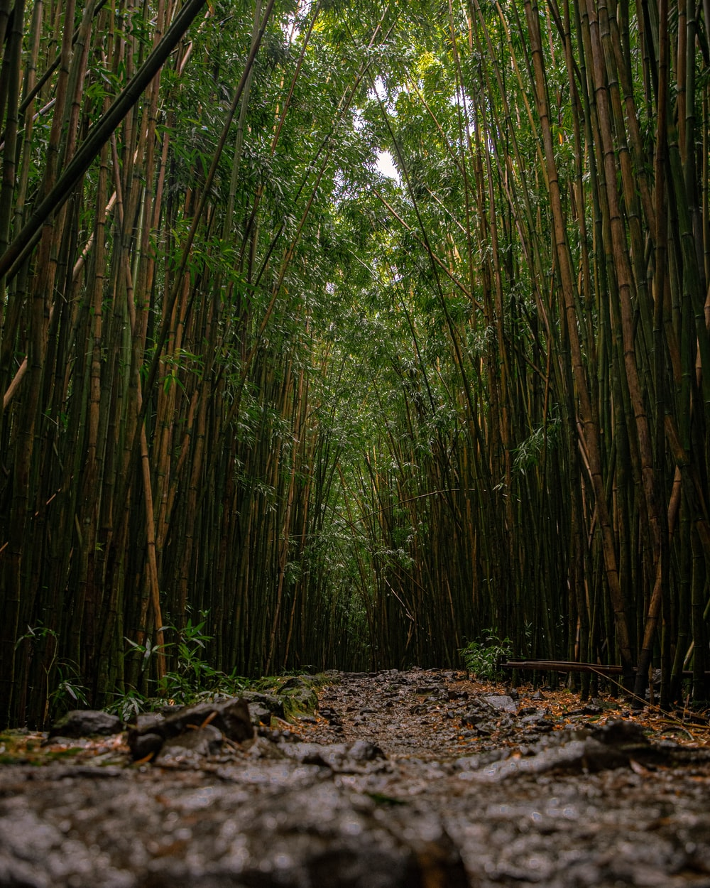 green bamboo trees during daytime