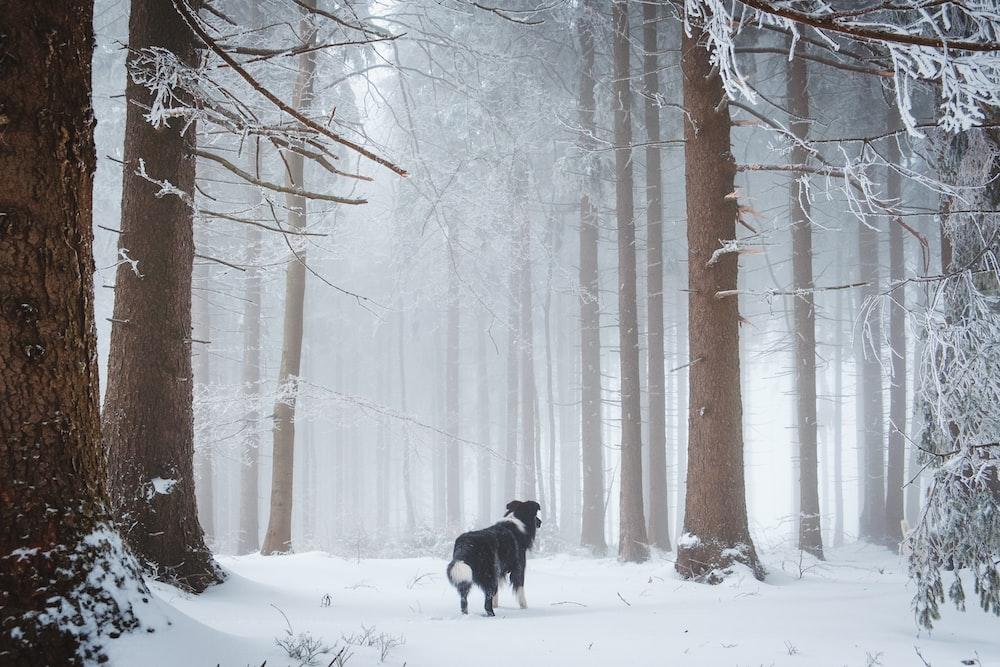 black and white short coat medium dog on snow covered ground during daytime
