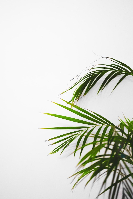 green leaf plant on white background