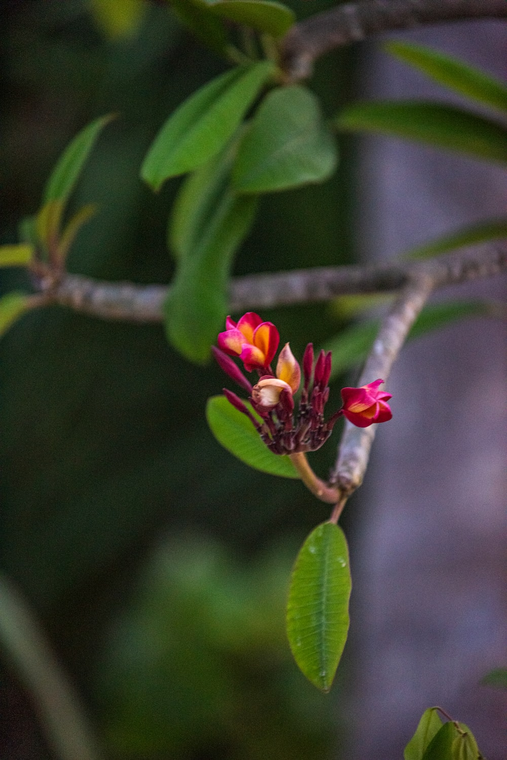 red flower on brown tree branch