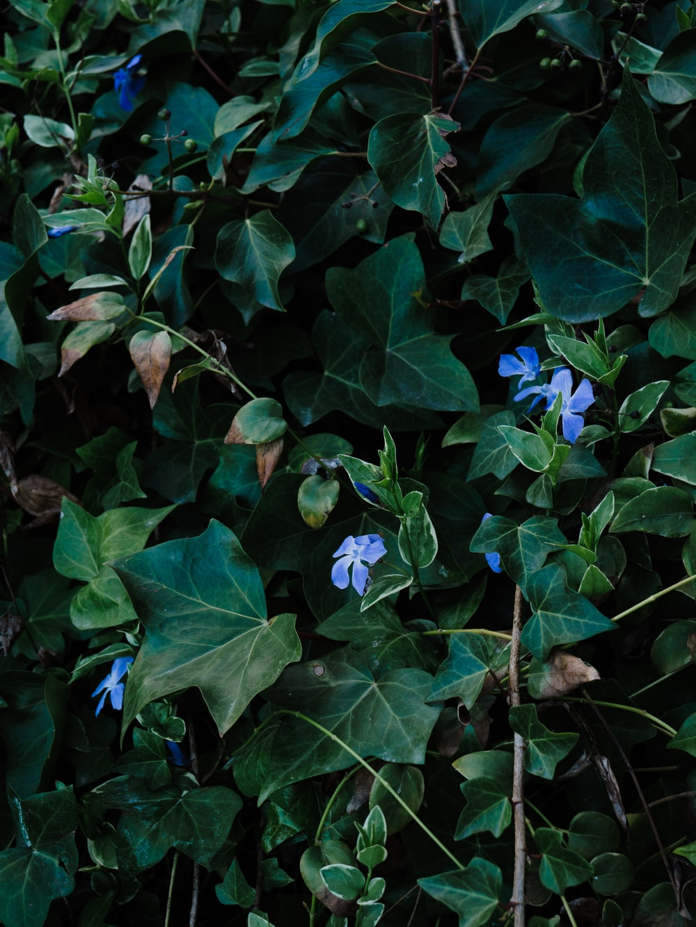green plant with blue flowers