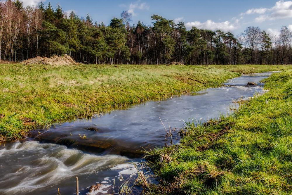 green grass field near river under blue sky during daytime