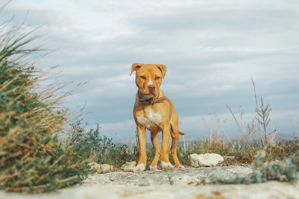 brown short coated dog on gray rocky ground during daytime