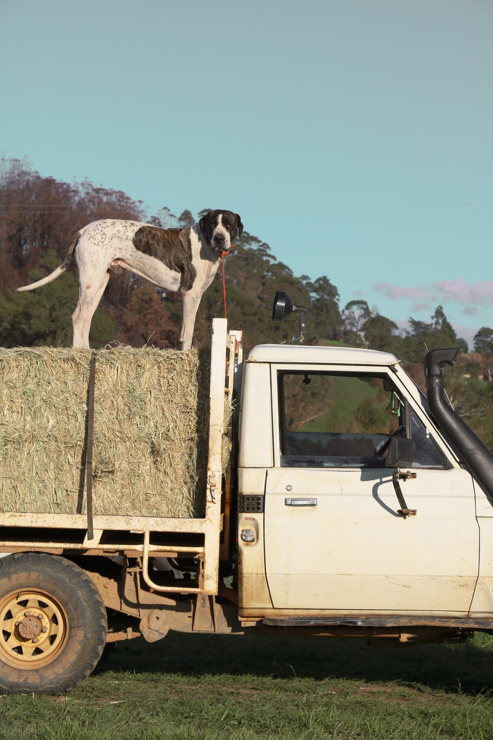 white and black short coated dog on brown truck during daytime
