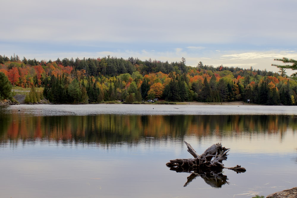 brown duck on lake during daytime