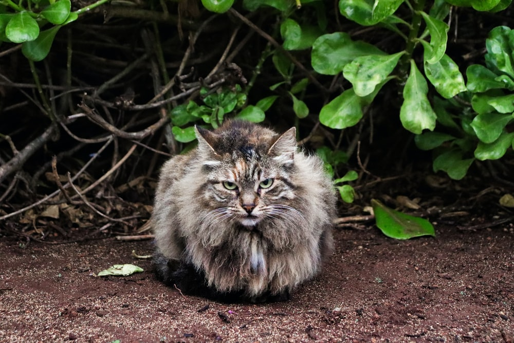 brown and white long fur cat on brown soil