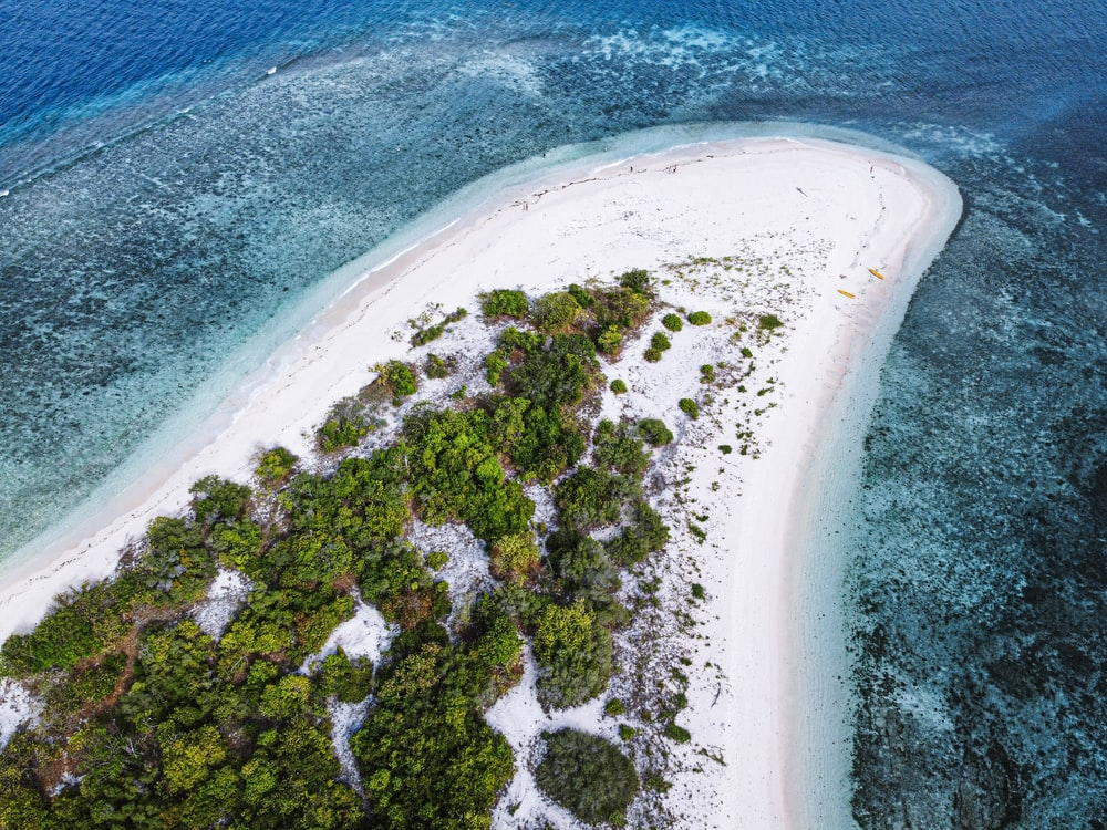 aerial view of green trees on white sand beach during daytime