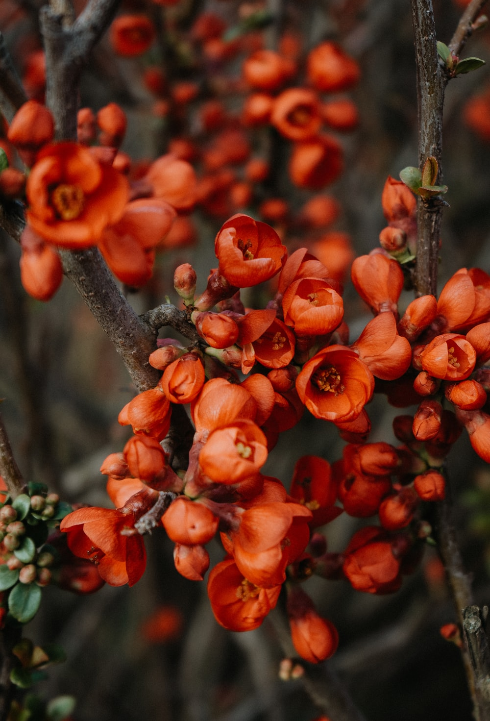 red flowers on brown tree branch