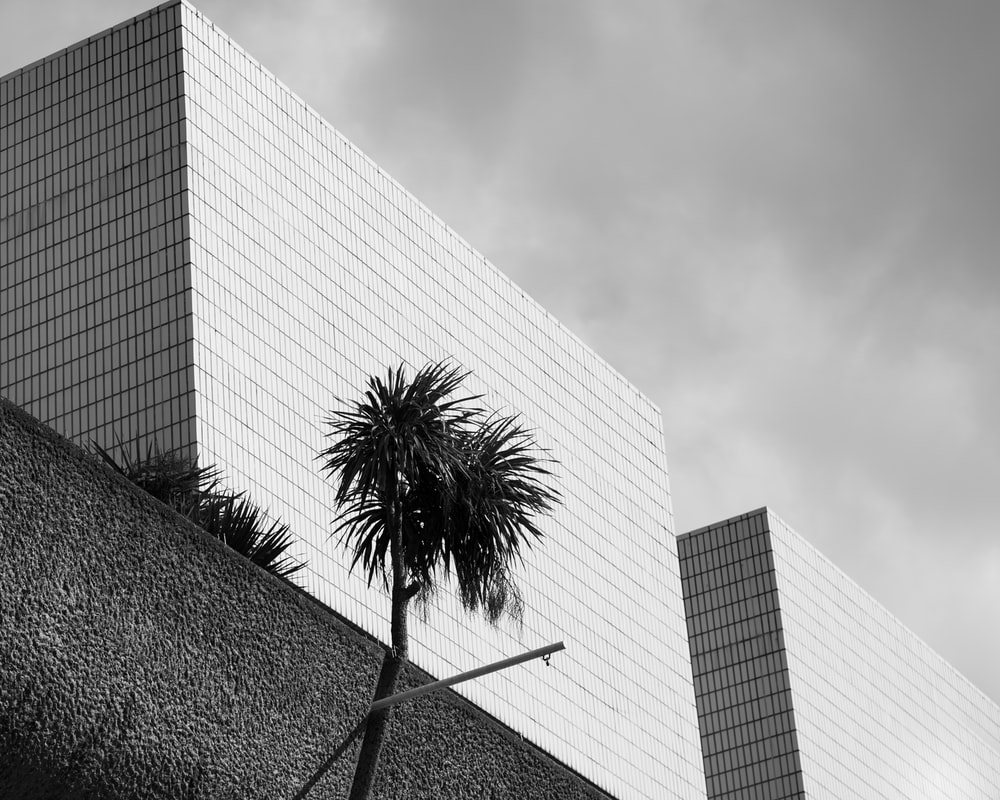 grayscale photo of palm tree near building