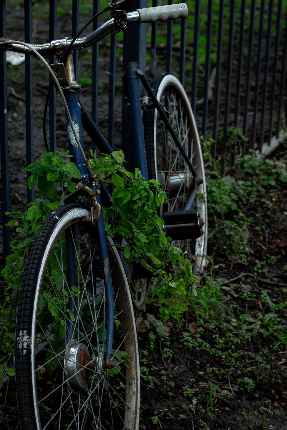 blue bicycle with green plant on it