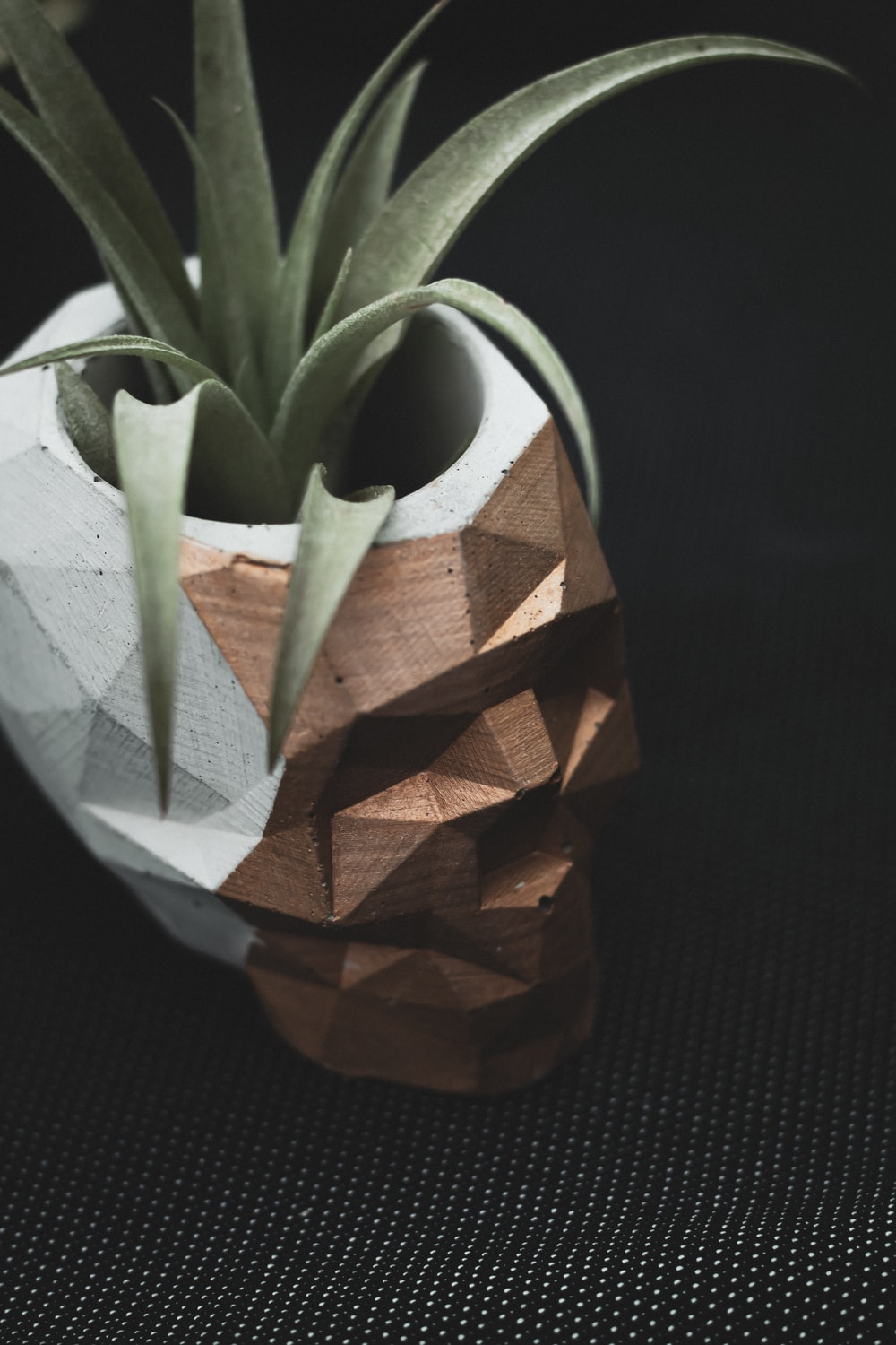 brown and green plant in brown pot