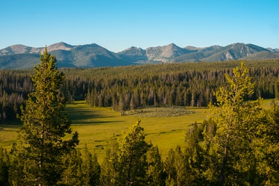 green trees and mountains during daytime montana teams background