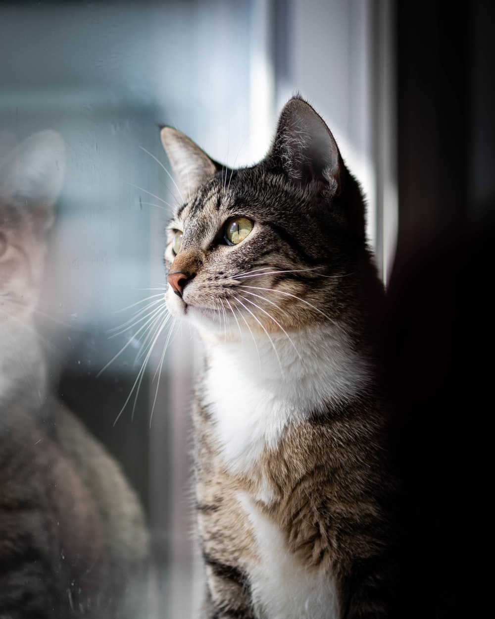 brown tabby cat looking at the window