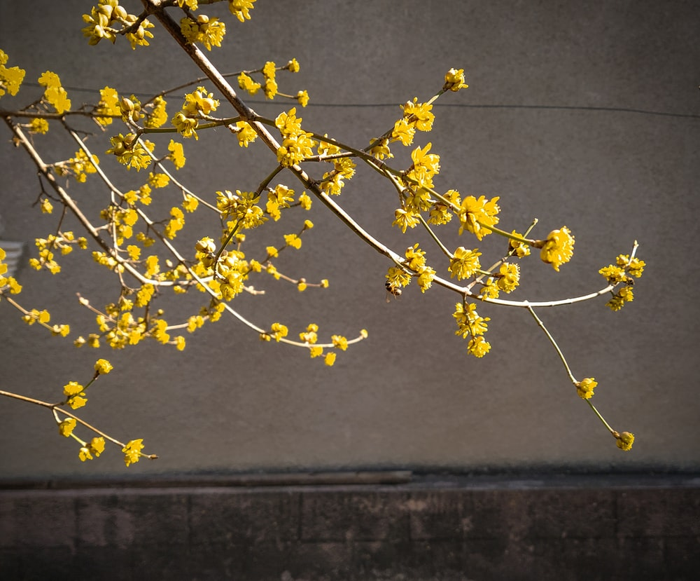 yellow flowers on gray concrete wall