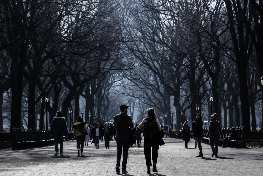 people walking on road near bare trees during daytime