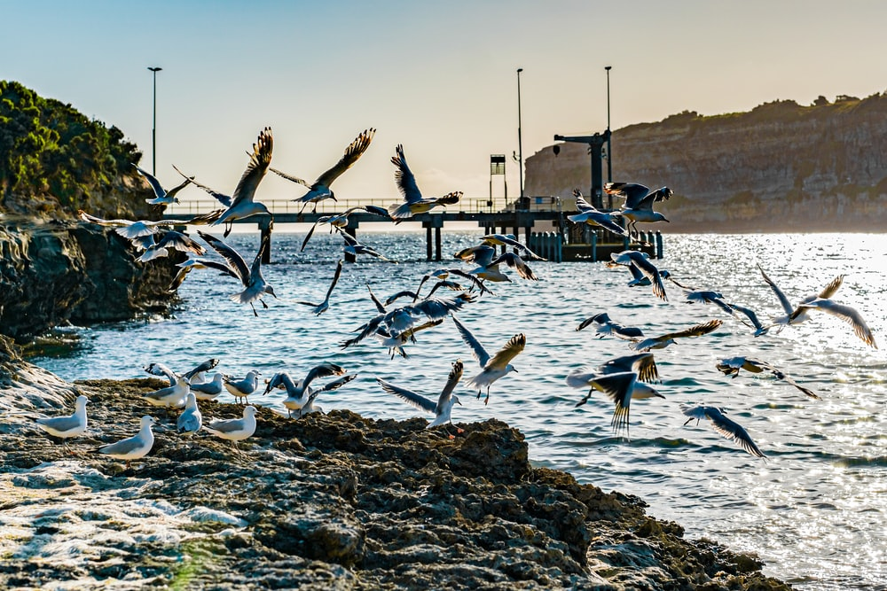 flock of birds on brown rock near body of water during daytime
