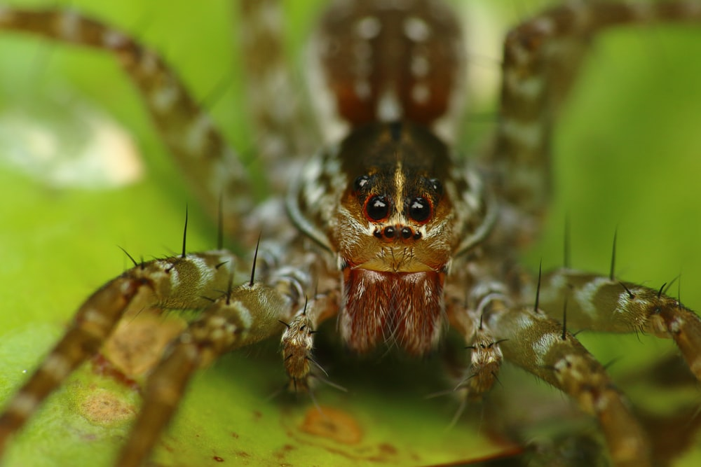 brown and black spider on web in close up photography