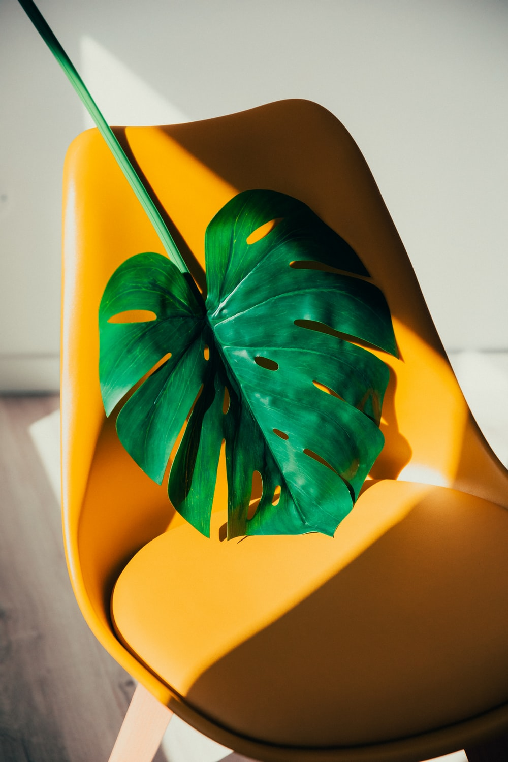 green leaf on yellow plastic chair